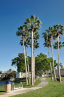 Washingtonia palms along the Peninsula Park walking path with the bike rack in the foreground.